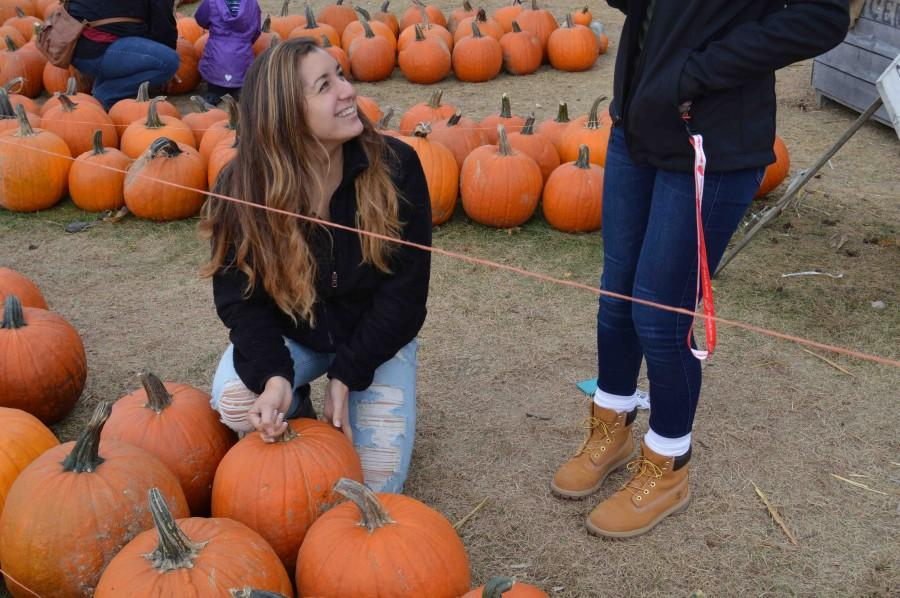 Yesterday was a half day, senior Alyssa Branoff said. My friends and I thought it would be fun to go to Spicers to get in the spirit for Halloween and pick out a pumpkin.