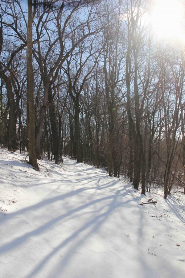 289 WORD RANT: Snow Days