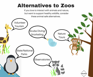 Zoos are detrimental to animal's health