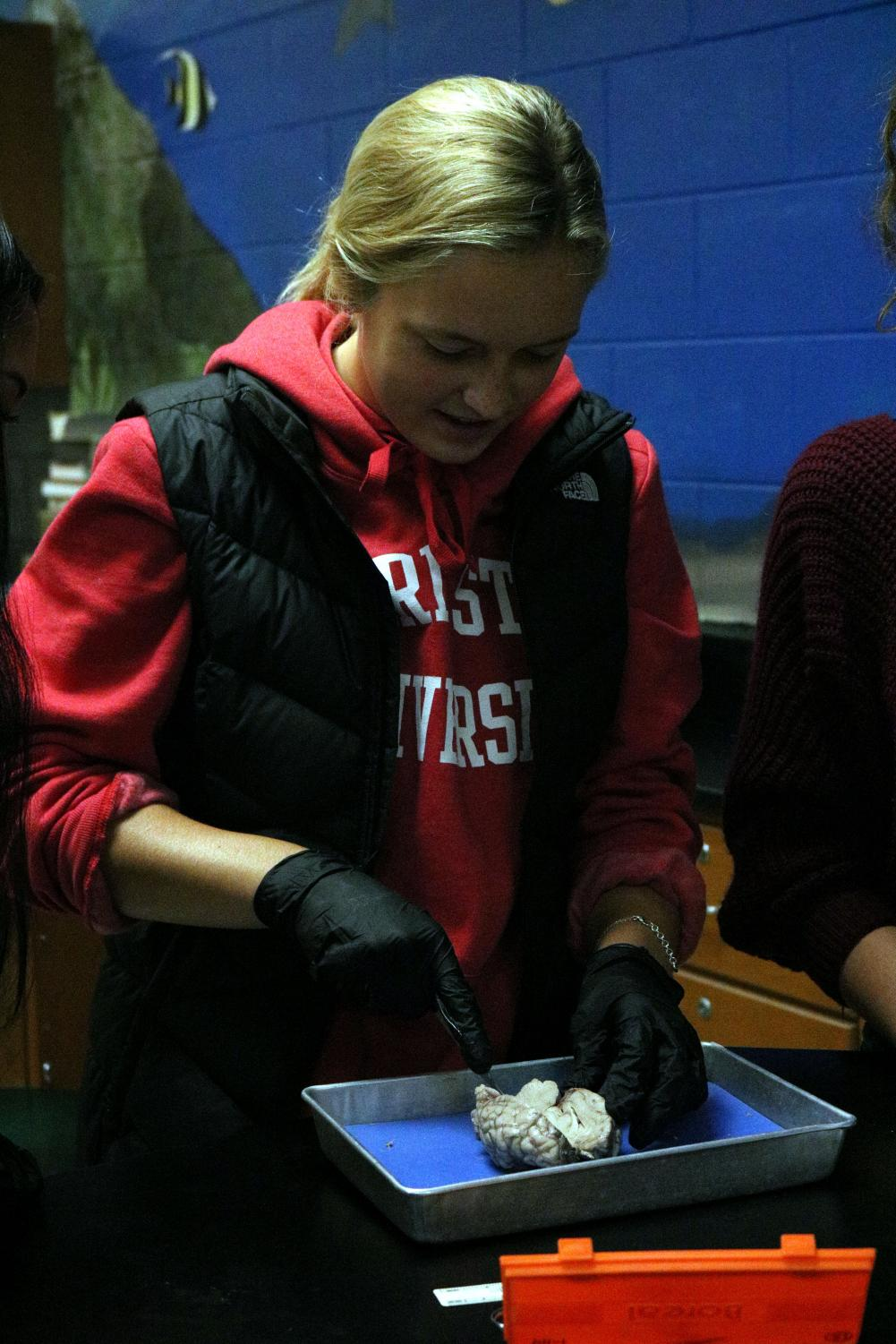 Junior Brook Herbstreit is in her Anatomy class doing a lab. She was examining a lamb's brain.