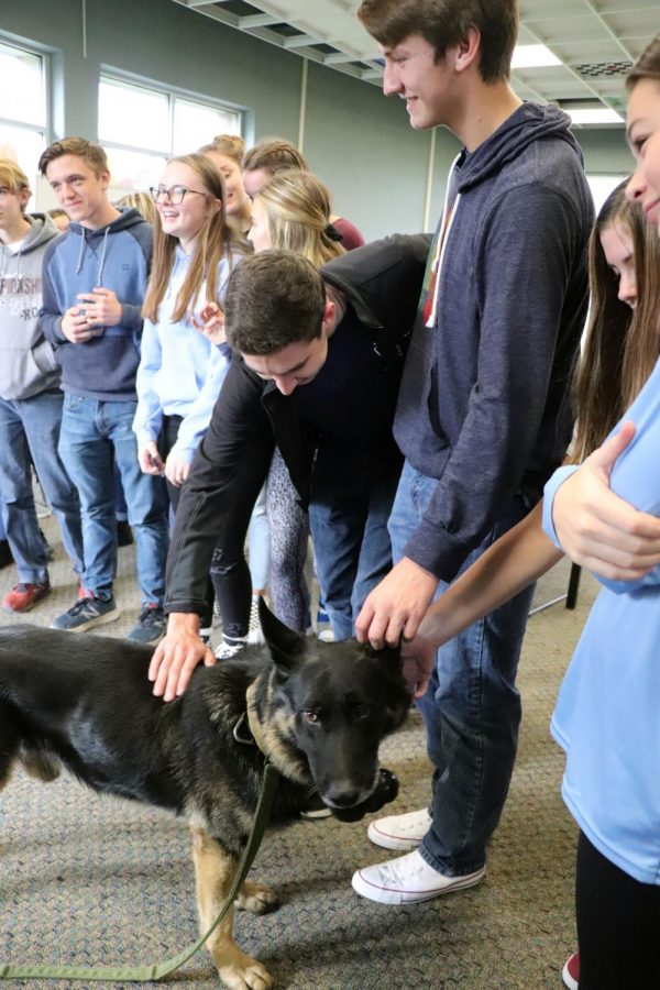 Junior Brody Stack pets a police dog during a visit from a Fenton police officer. On November 5, Shawn Lawrence had a police officer bring his dog in to show students how it can find drugs, and told stories of his experiences with the dog.
