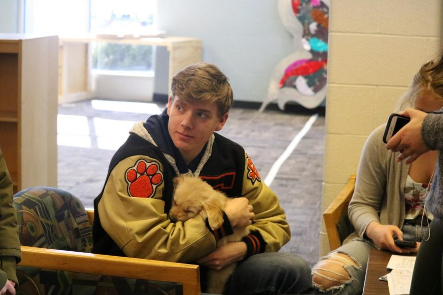 Senior Micah Dekracker, cuddles with the newest addition to Fenton High School. On Feb. 28 the library brought in therapy dogs for the students.