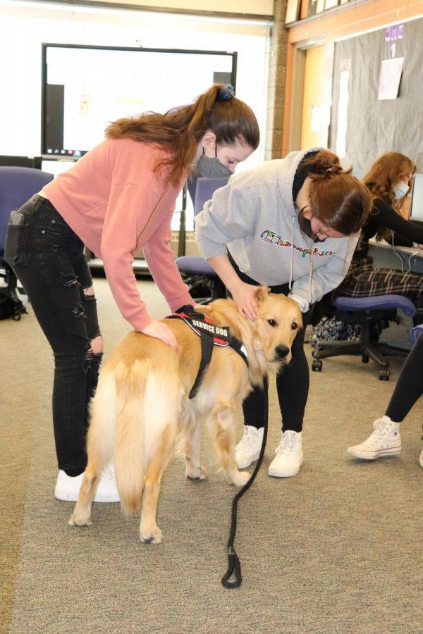 Hard a work in room 5-109, Fenton High's Certified Therapy Animal Sunny greets juniors Bree Soule and Halee Alexander. On Jan. 29, Advanced Journalism students had a chance to meet and greet sunny during class.